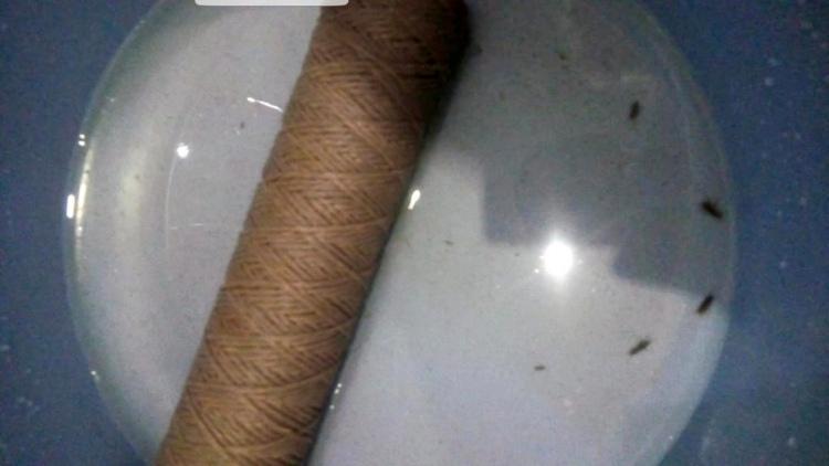 Житель Дрогичина обнаружил в фильтре для очистки воды насекомых