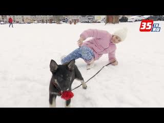 Девочке, собачку которой загрыз бойцовый пес, добрые люди подарили щенка