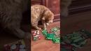 2048). 05.10.2016 - котик Рыжик (теперь Сенька) уехал домой (видео из дома)