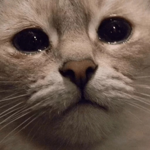 :catcry: