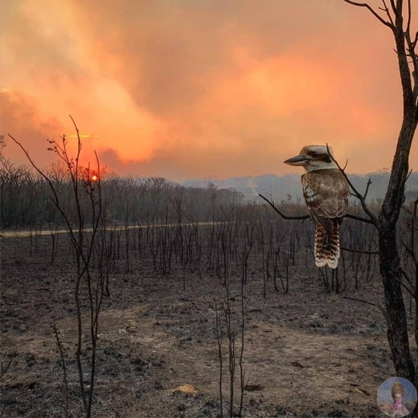 Австралия в огне. Погибло уже более миллиарда животных!