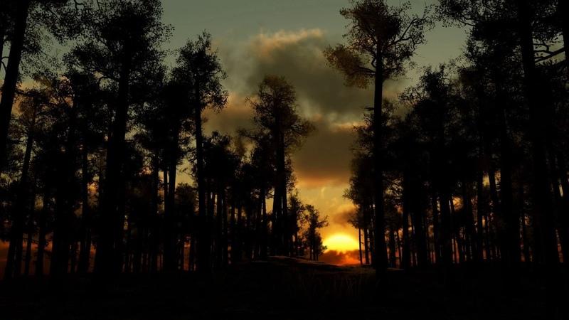 Звуки вечернего леса Для сна и релаксации 23 Минуты