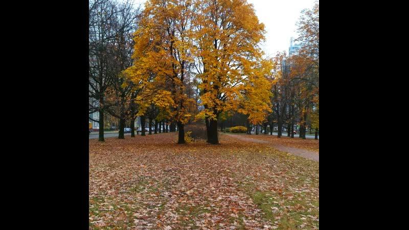 Осень в Санкт Петербурге октябрь 2020 PhotoVideoMaker 20201028 1603870261133