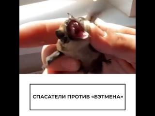 "Спасатели против ""Бэтмена"""