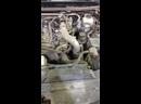 Видео от Детейлинг центр в Самаре