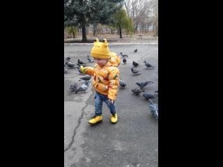 Голуби, голуби, глупые птицы, Что вам на месте никак не сидится?