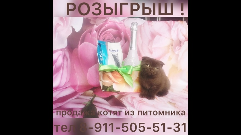 Бутылка игристого и корм для котят