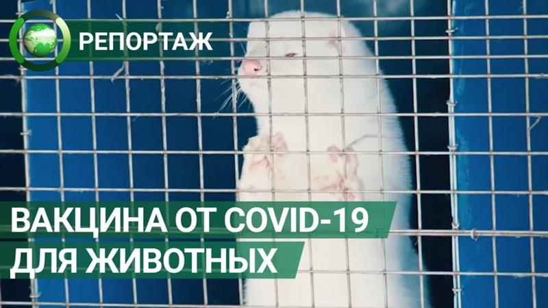 Вакцину от коронавируса для животных зарегистрировали в России. ФАН-ТВ