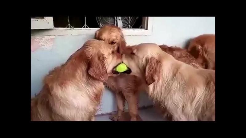 Не ссорьтесь девочки я вам завтра еще один шарик принесу