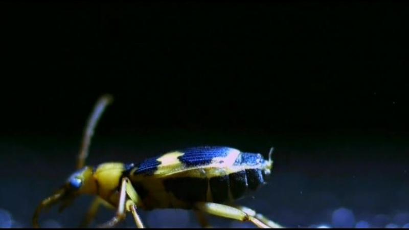 Яд Достижение эволюции Poison an Evolutionary Mystery 3 из 3 2015 02 Яд и баланс экосистемы