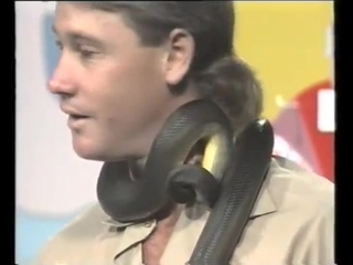 Crikey. Does that hurt ? Nup... Steve Irwin 1991.