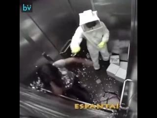 Весёлый пчеловод в лифте
