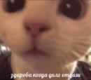 Сибирский Кирилл |  | 44