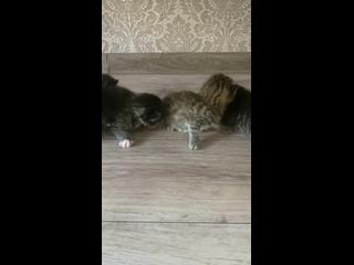 Video by Ekaterina Tugushina