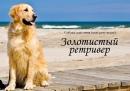 Юлия Лабовская фотография #20