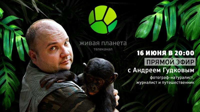 КАК СНИМАТЬ ЖИВОТНЫХ Прямой эфир с Андреем Гудковым фотографом натуралистом и путешественником