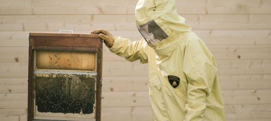 На заводе Lamborghini занялись пчеловодством во имя экологии