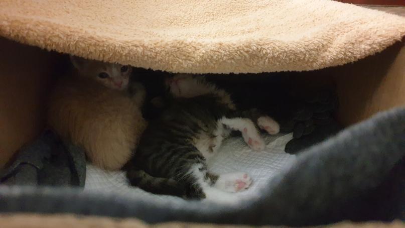Срочно! Ищем хозяина для котят. Звоните +79997912048 Сочи Адлер. Распространите, пожалуйста. Не аноним