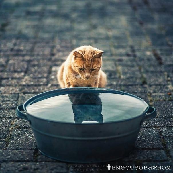 Собственное отражение не всегда воспринимается из реальности