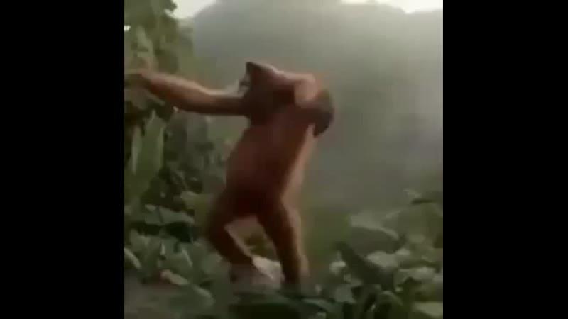 обезянка танцует тупая жвачка малкасоли ЗюЗю зикзикхайль