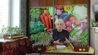Сколько томатов посадить в теплицу 3 на 8 метров? Ольга Чернова.