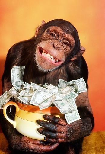 обезьяна-деньги