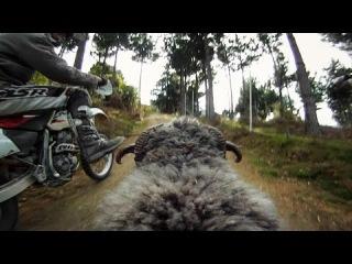 GoPro: Ram vs Dirtbiker