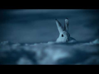 Earth At Night In Color — Bunnies Brawl | Apple TV+ | narrated by Tom Hiddleston
