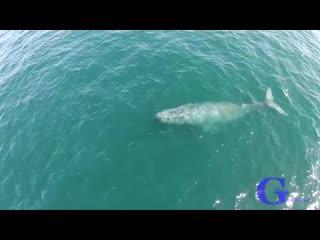 Горбатый кит стреляет радугой.mp4