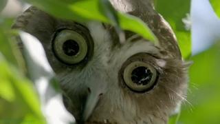 «Дикие птицы Австралии (3). Воздушные охотники» (Познавательный, природа, орнитология, животные, 2016)