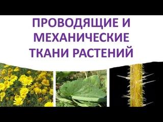 9. Проводящие и механические ткани растений