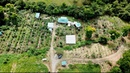Creating a Dreamy Homestead in Costa Rica Shocking Abundance In Only Months of Growth