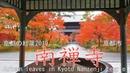 [4K]京都の紅葉2019 南禅寺 京都市 Autumn leaves in Kyoto Nanzenji temple Kyoto Japan