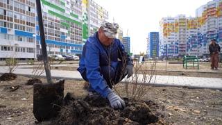 Весной в Городе Спутнике зацветет сирень